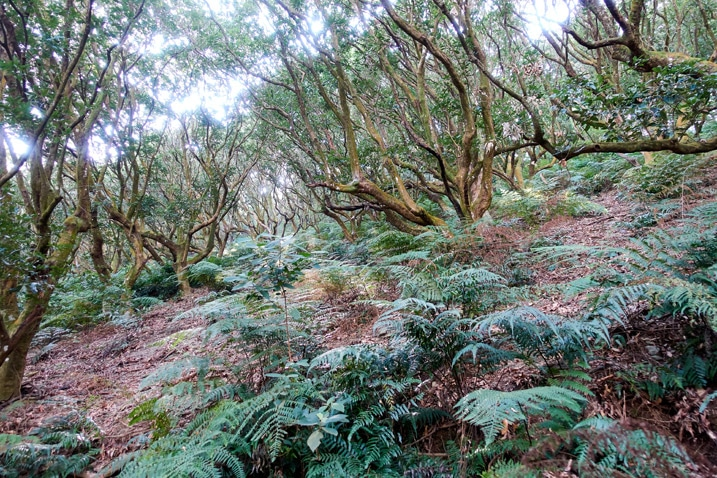 Trees on the mountainside -WeiLiaoShan Hike – 尾寮山