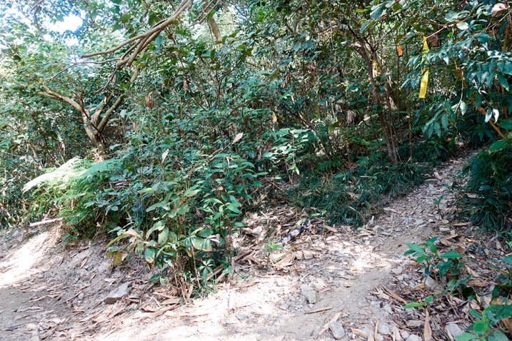 A trail breaks off from the dirt road - tress all around