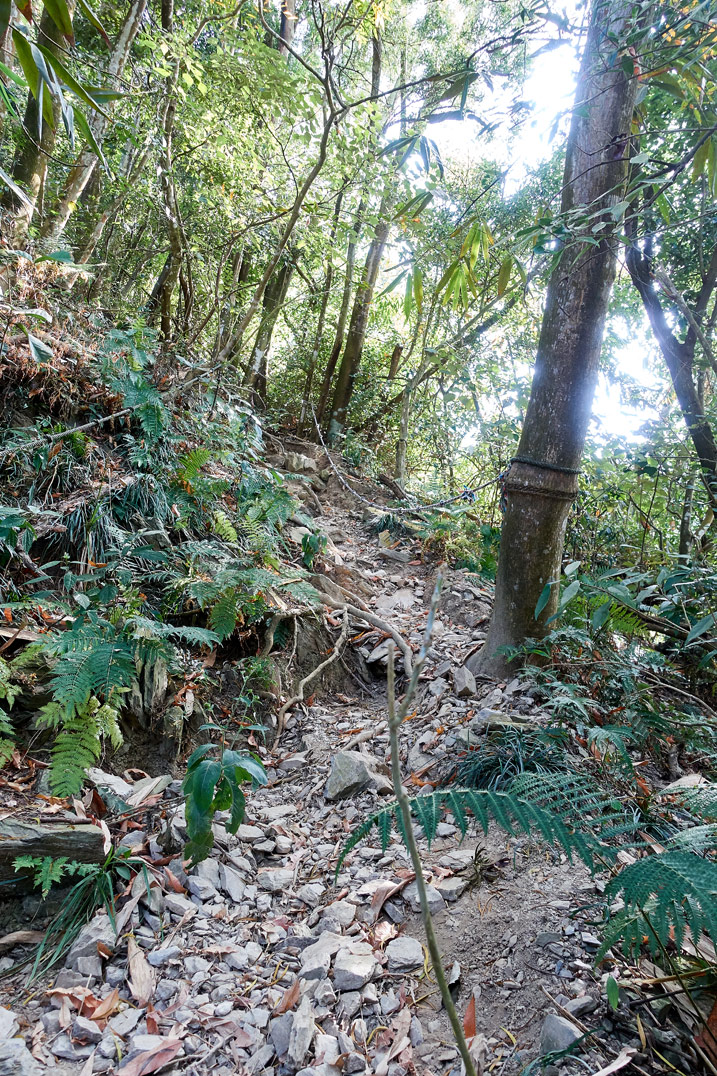 Rocky trail going up a mountain - trees all over - WeiLiaoShan Hike – 尾寮山