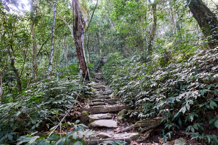 makeshift stairs going up the mountain - trees on either side - WeiLiaoShan Hike – 尾寮山