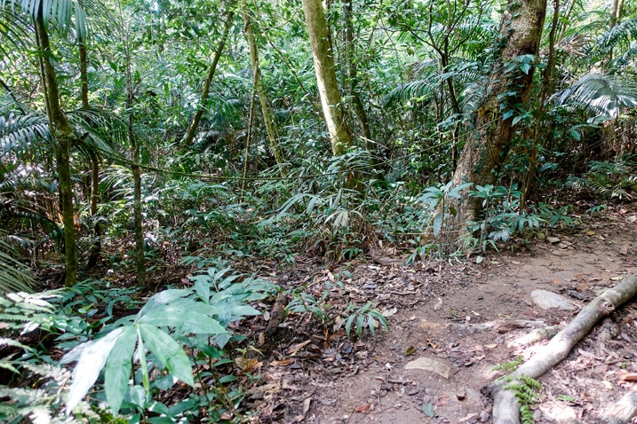Mountain trail - rope blocking another trail to the side - WeiLiaoShan Hike – 尾寮山