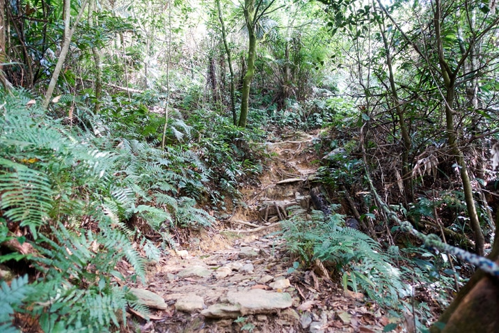 Rocky and rooted trail going up a mountain - trees on either side - WeiLiaoShan 尾寮山 trail