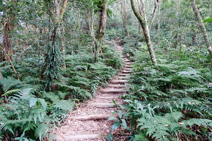 Mountain stairs going up - trees and plants on either side - WeiLiaoShan 尾寮山 trail