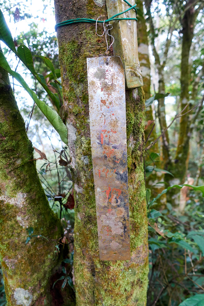 Metal sign with faded Chinese words attached to a tree - WeiLiaoShan 尾寮山