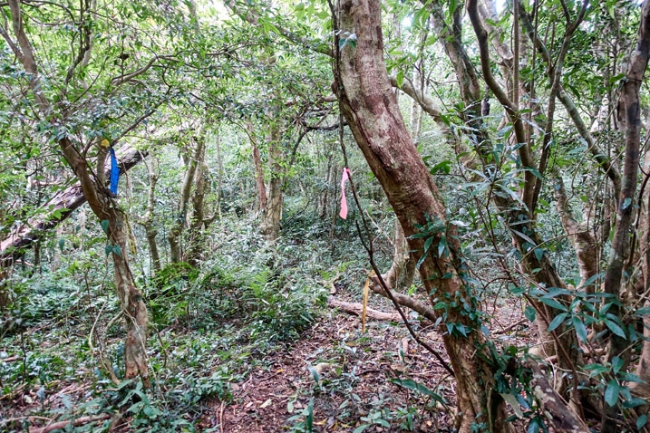 Mountain forest trail with trail ribbons - BeiHuLuShan 北湖呂山