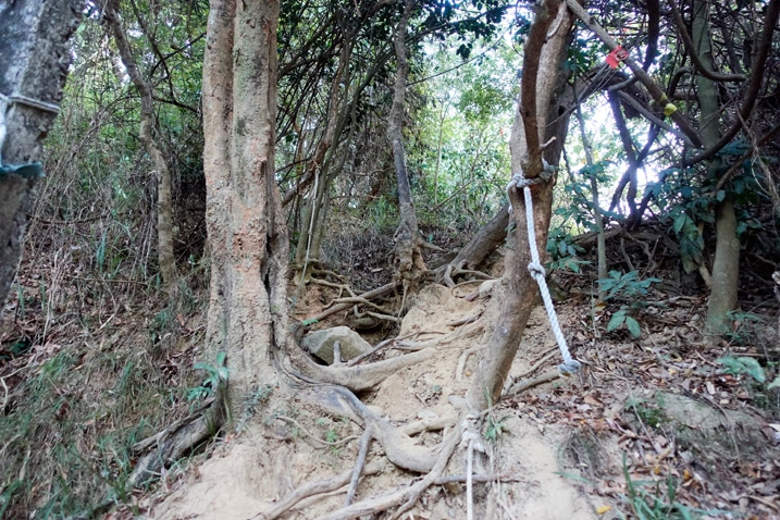 Trees and rope going upwards 旗月縱走 Trail Head