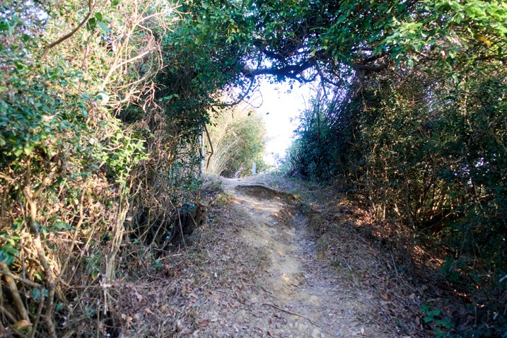Wide dirt trail surrounded by trees - 旗月縱走