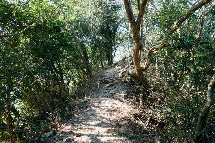 Ridge trail with trees on either side - 旗月縱走 - 福美山