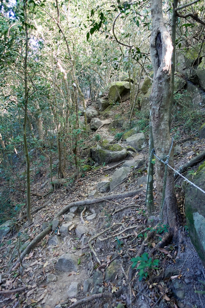 Trail going up with rope - trees and rocks around - 旗月縱走