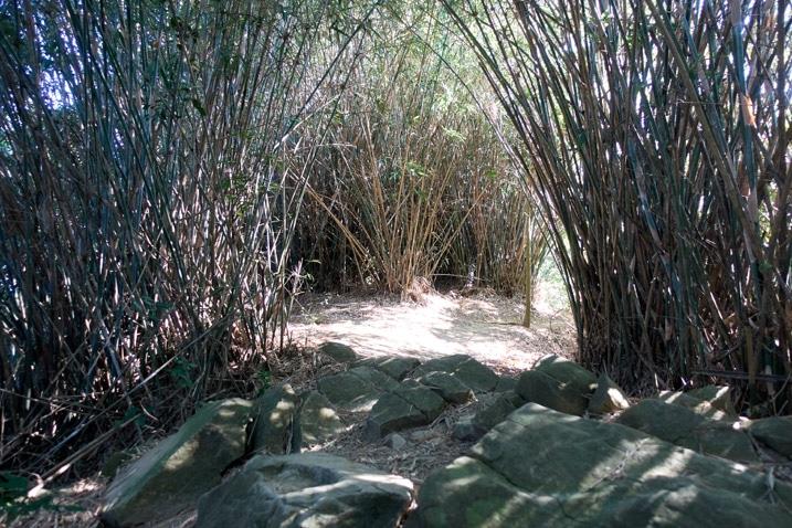 Rocks and many small bamboo trees - 旗月縱走
