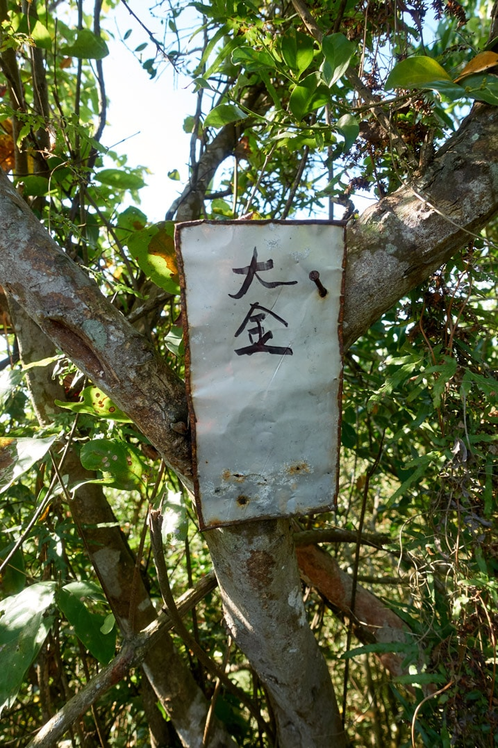 Metal sign with chinese words written on it attached to tree - 旗月縱走 - 金字圓山