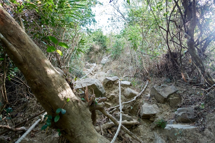 Steep rocky climb with ropes - trees on either side - 旗月縱走