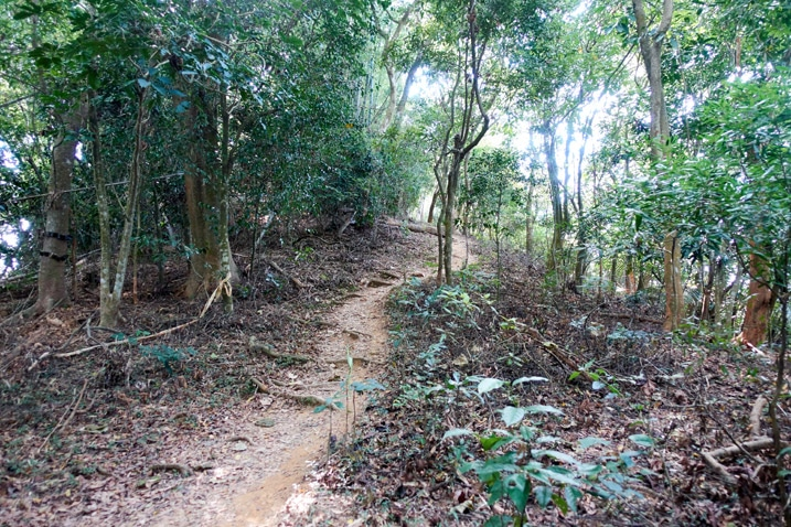 Dirt trail surrounded by trees - 靈山步道 - 旗月縱走