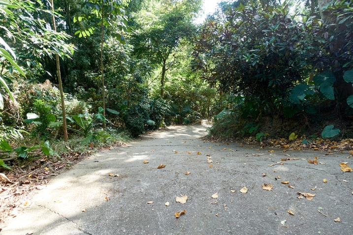 Paved road going down - trees either side - 靈山步道 - 旗月縱走
