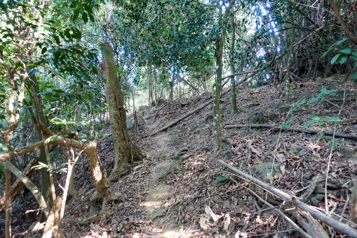 Trail between trees on mountain - 旗月縱走