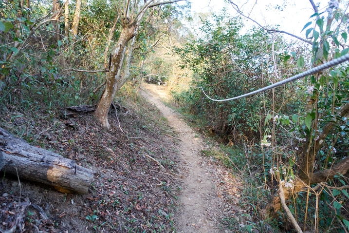 Trail with rope - trees - 旗月縱走 - 月光山