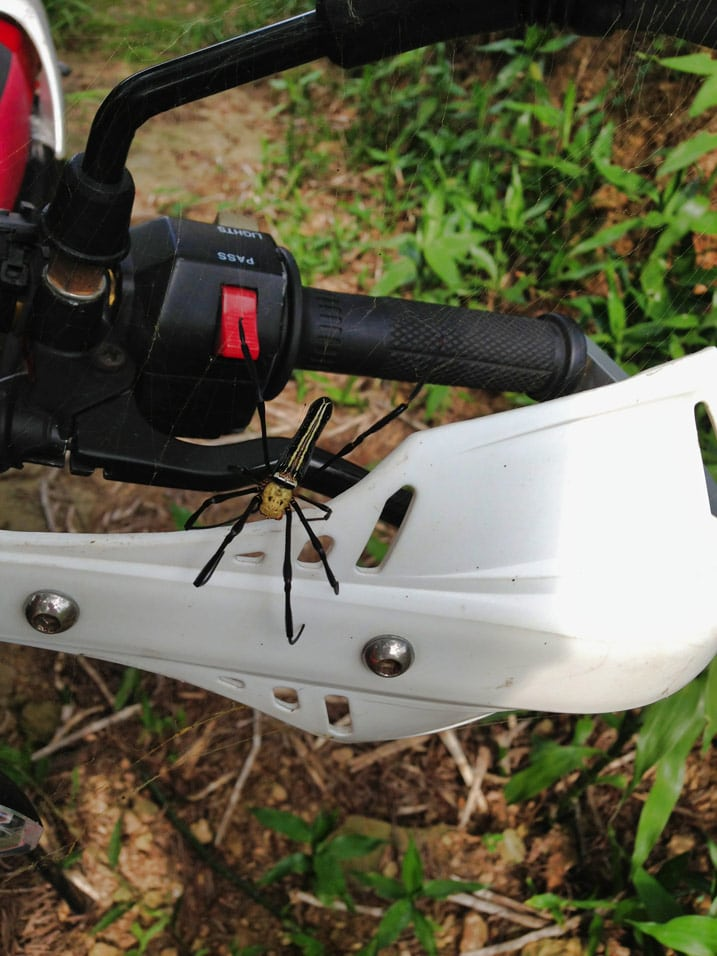 Golden Orb Weaver spider on motorcycle hand guard - WuTanShan - 武潭山