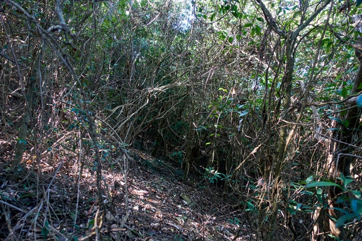 jungle - forest - lots of trees and overgrowth - XinZhiShan - 新置山
