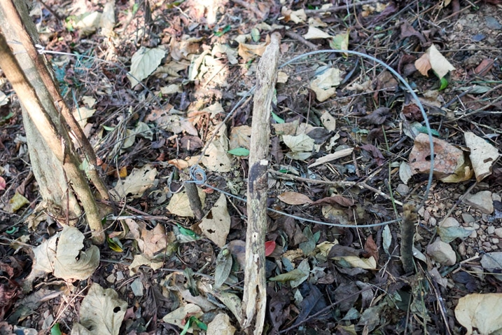 Wire snare traps in forest - XinZhiShan - 新置山
