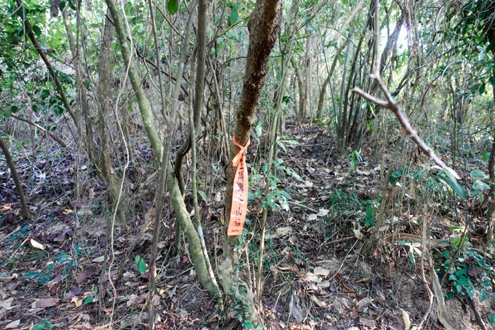 Trail marker tied to a tree in forest