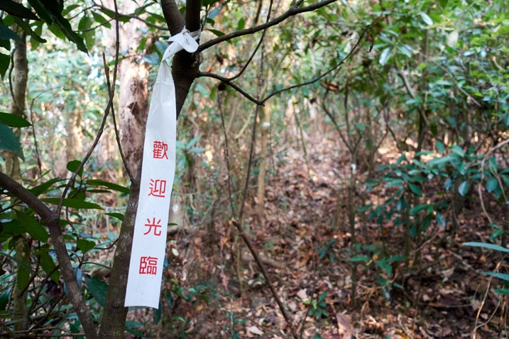 White trail marker ribbon tied to tree - trail in background - WuTanShan - 武潭山