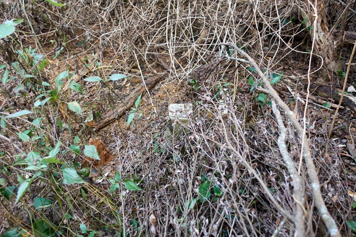 Stone marker covered by dead overgrowth - WuTanShan - 武潭山 Peak