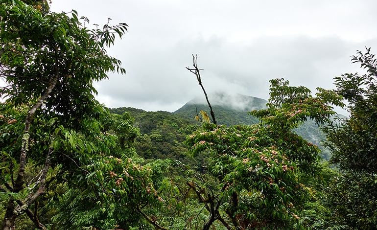 Mist covered mountains - trees in foreground