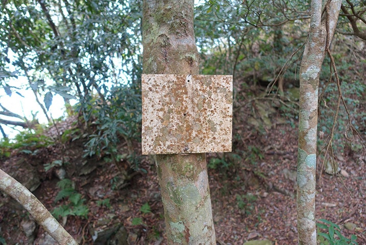 Very old sign attached to tree - hard to read