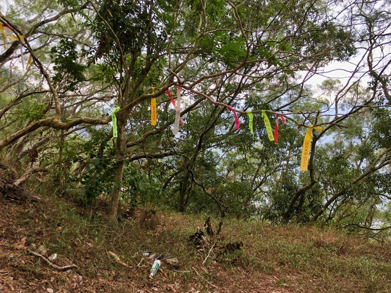The ridge with trail ribbons on tree