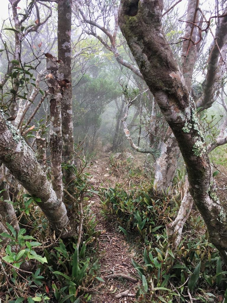 Trees, foggy, trail