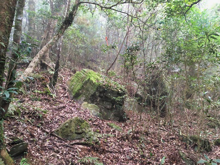 Moldy boulders and rocks - forest