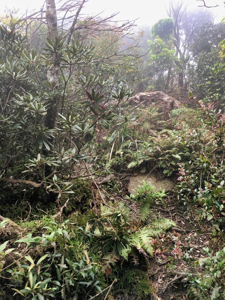 Trees, hard to see path, rocks, foggy