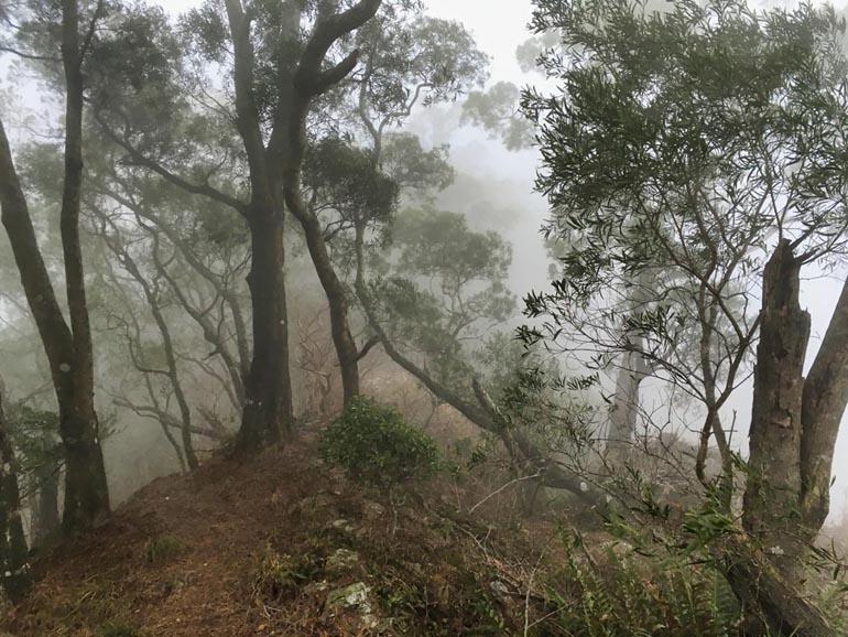 Foggy ridge with trees