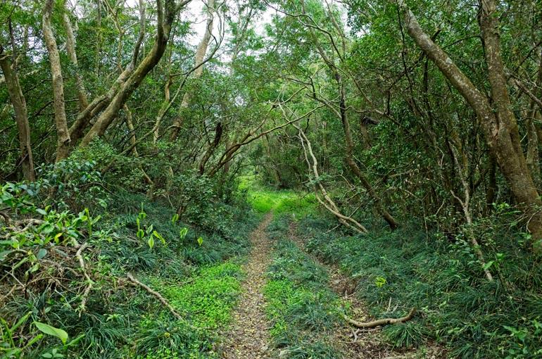 Grassy double track trail