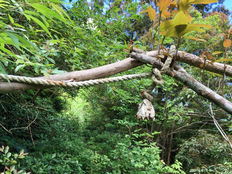 Rope tied up along tree branches going over trail