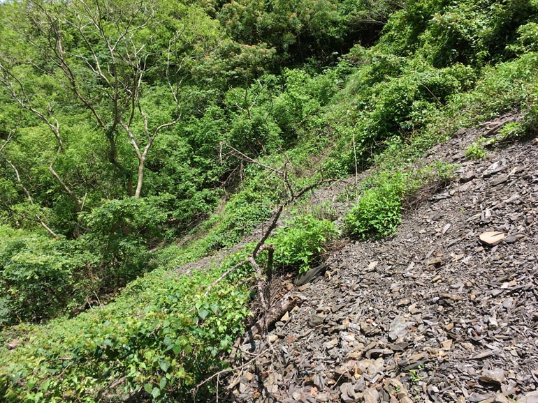 Landslide - Mixed rocks and vegetation
