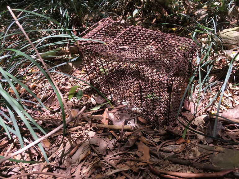 Rusty rat trap