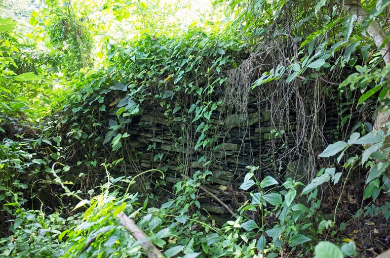 Stacked rock foundation wall with vines growing all over
