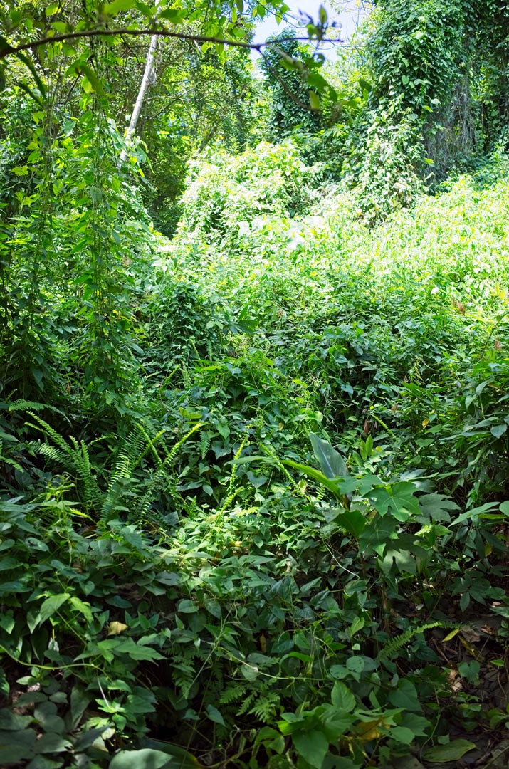 Overgrown jungle
