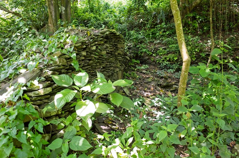 stacked rock wall with vines on it