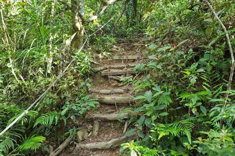 Trail going up - ropes to the left - logs placed as stairs