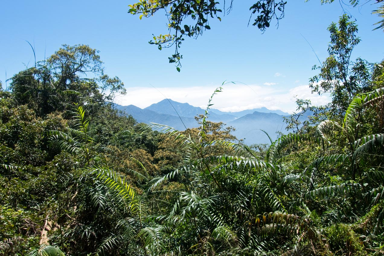 View of the mountains with blue sky - lots of vegetation in front