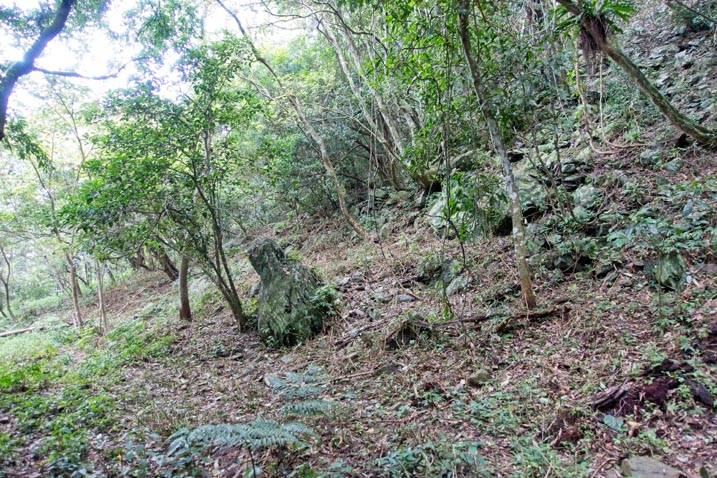 Trees and rocky slope to the right - dead leaves and debris on forest floor