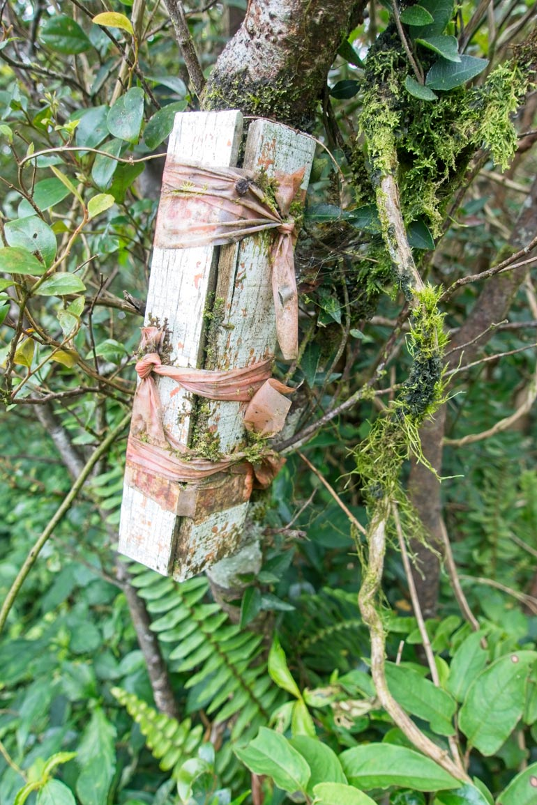 A few slats of wood painted white - faded - attached to tree with old faded red ribbon - moss growing in places