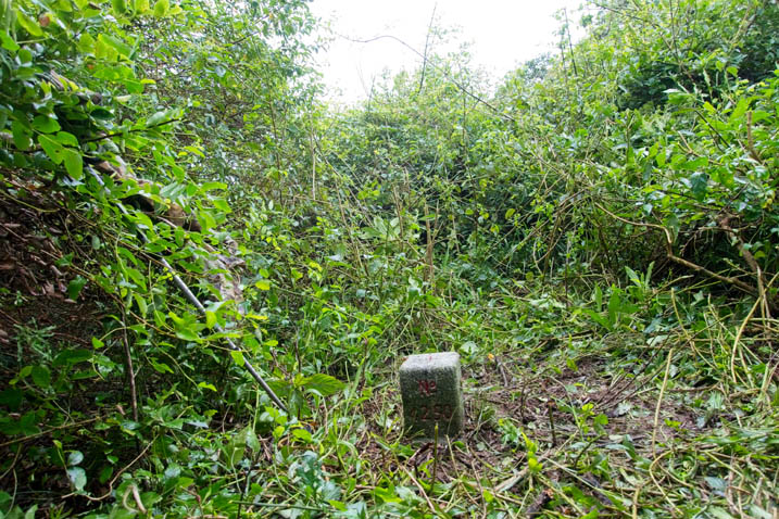 BaShiMoShan 巴士墨山 Triangulation marker - overgrowth all around - grass around it cut