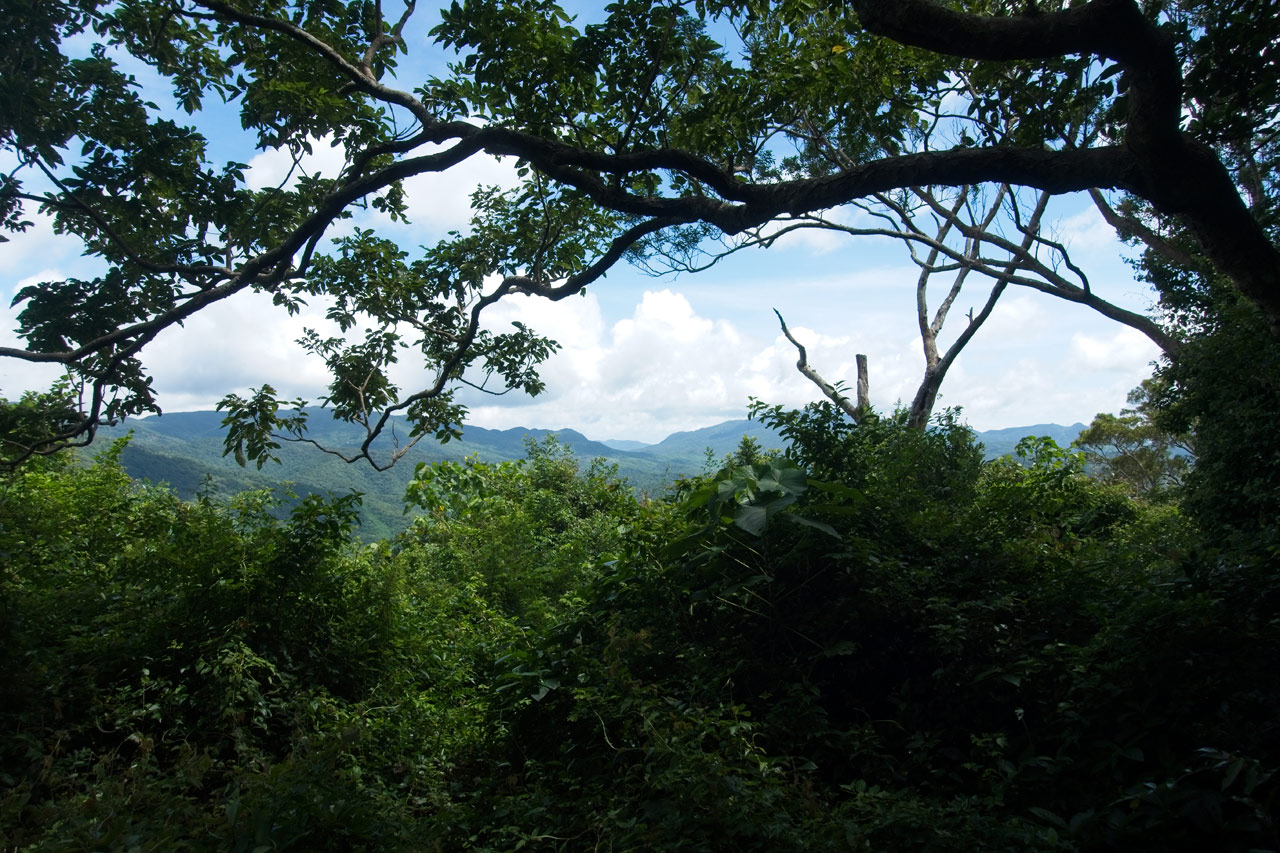Mountains in the distance - heavy canopy above