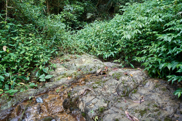 Rocky stream bed - small amount of water trickling down - plants all around