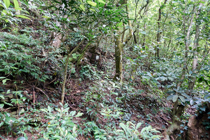 Mountain jungle - trees - plants - no trail