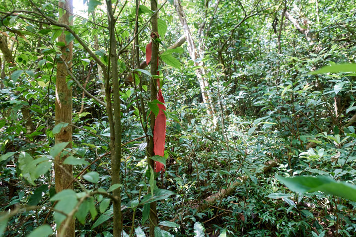 Red trail ribbon tied to a tree - jungle view