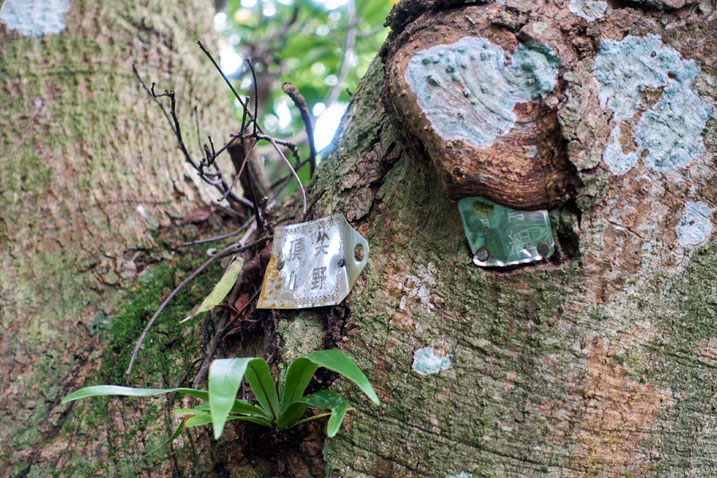 Two small metal signs nailed to a tree - cannot read what was once written on them
